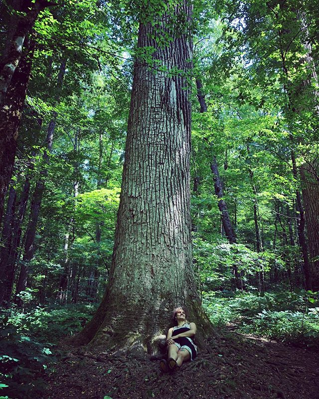 🌳🌳🌳🌳Joyce Kilmer National Forest. So much green! Pictures don't show the immensity very well, but the tree I was laying against easily would've needed 4 people arms outstretched to complete the circumference.  The tree roots in the second picture grew around a rock! What??