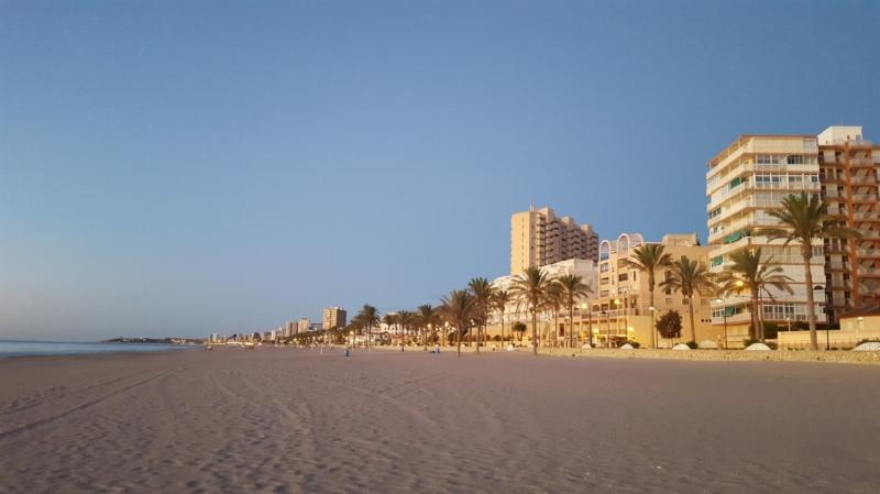 Alicante strand och palmer.jpg
