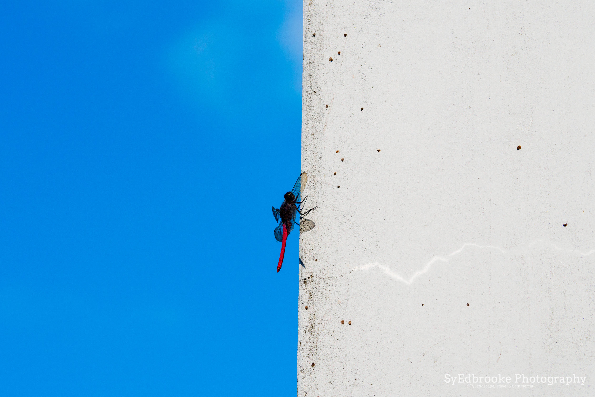 A dragonfly hanging out. I liked the simple contrast on this one. f11, ISO 200, 1/160, 300mm