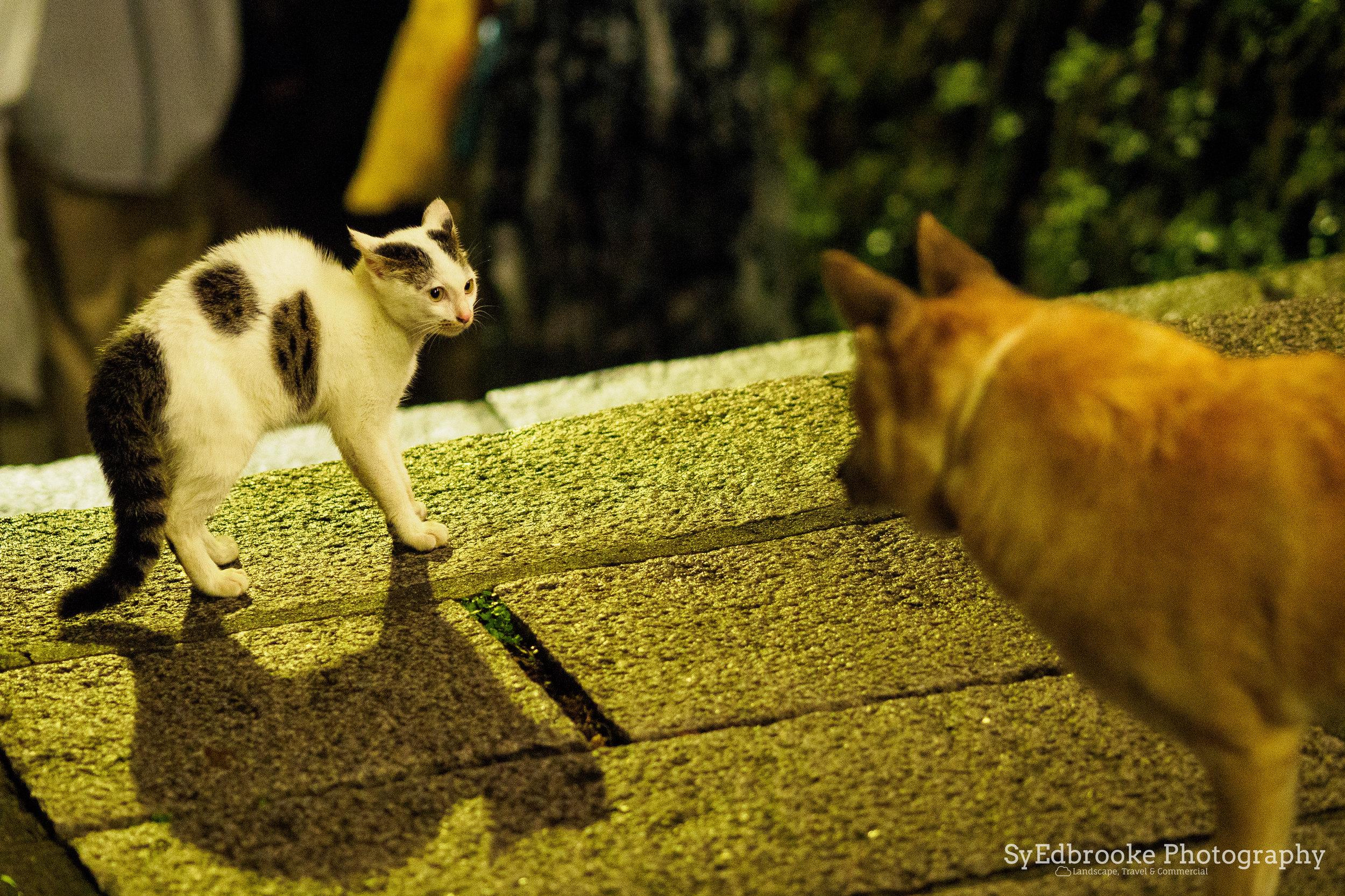 cat meet dog. f1.8, ISO 3200, 1/80, 75mm
