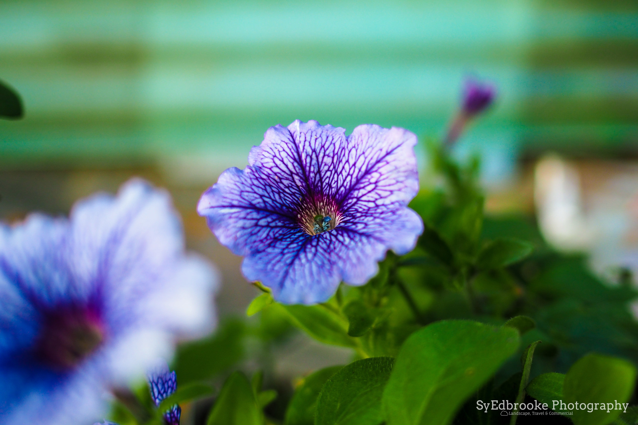 flowers on the way. f1.8, ISO 200, 1/200, 35mm