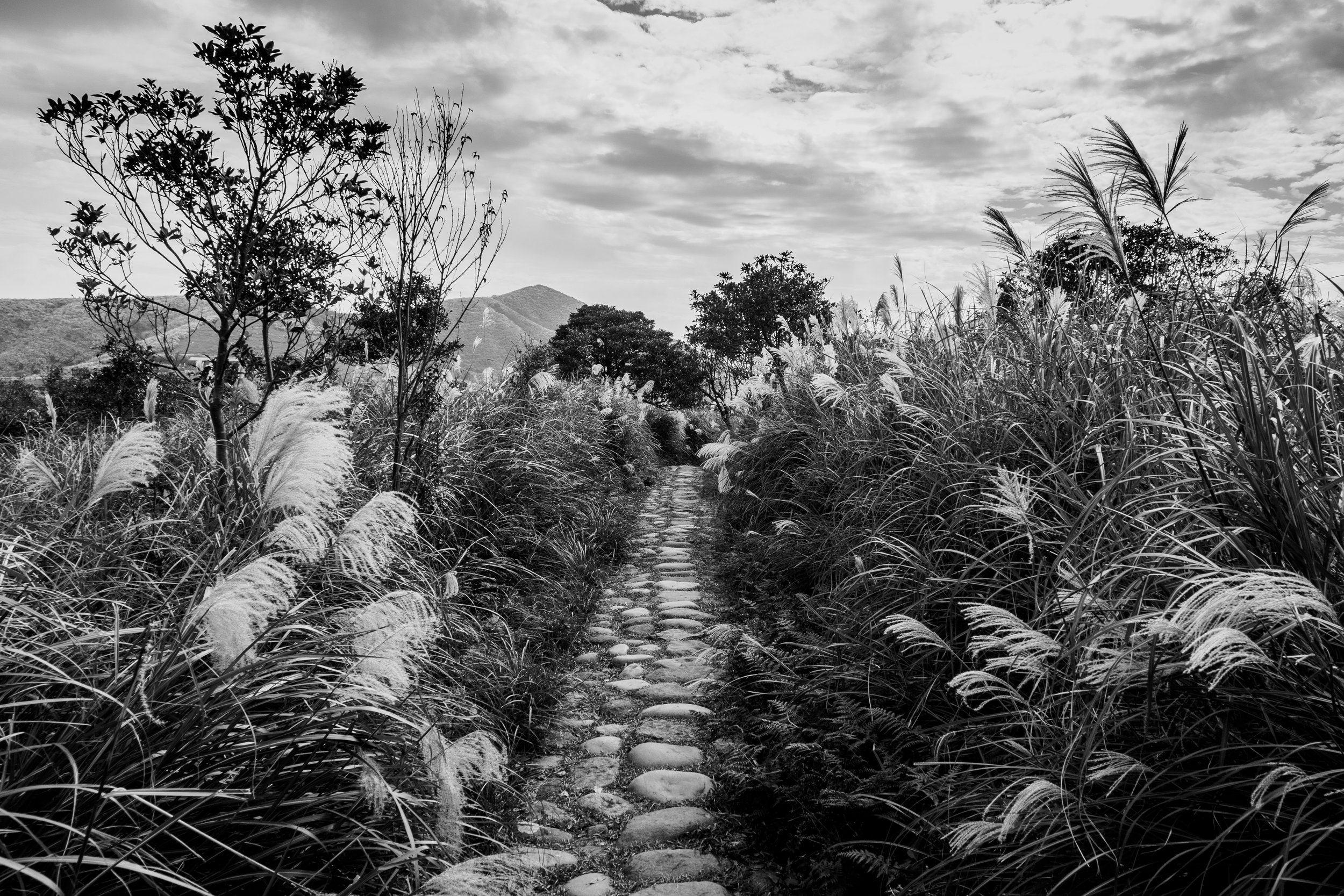 The path to the pastures. f5.6, ISO 200, 1/160, 24mm