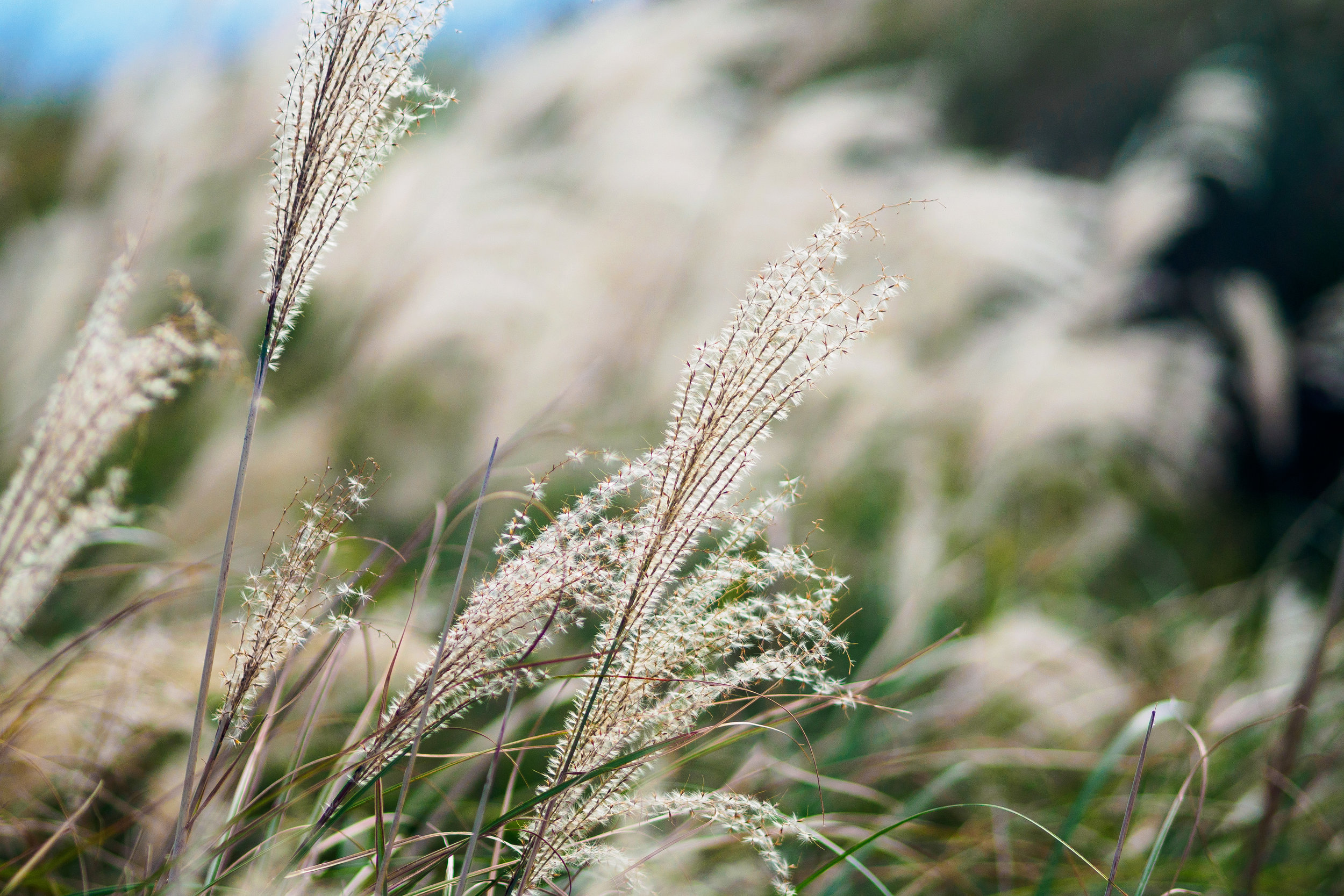the long grass. f1.8, ISO 200, 1/2000, 150mm
