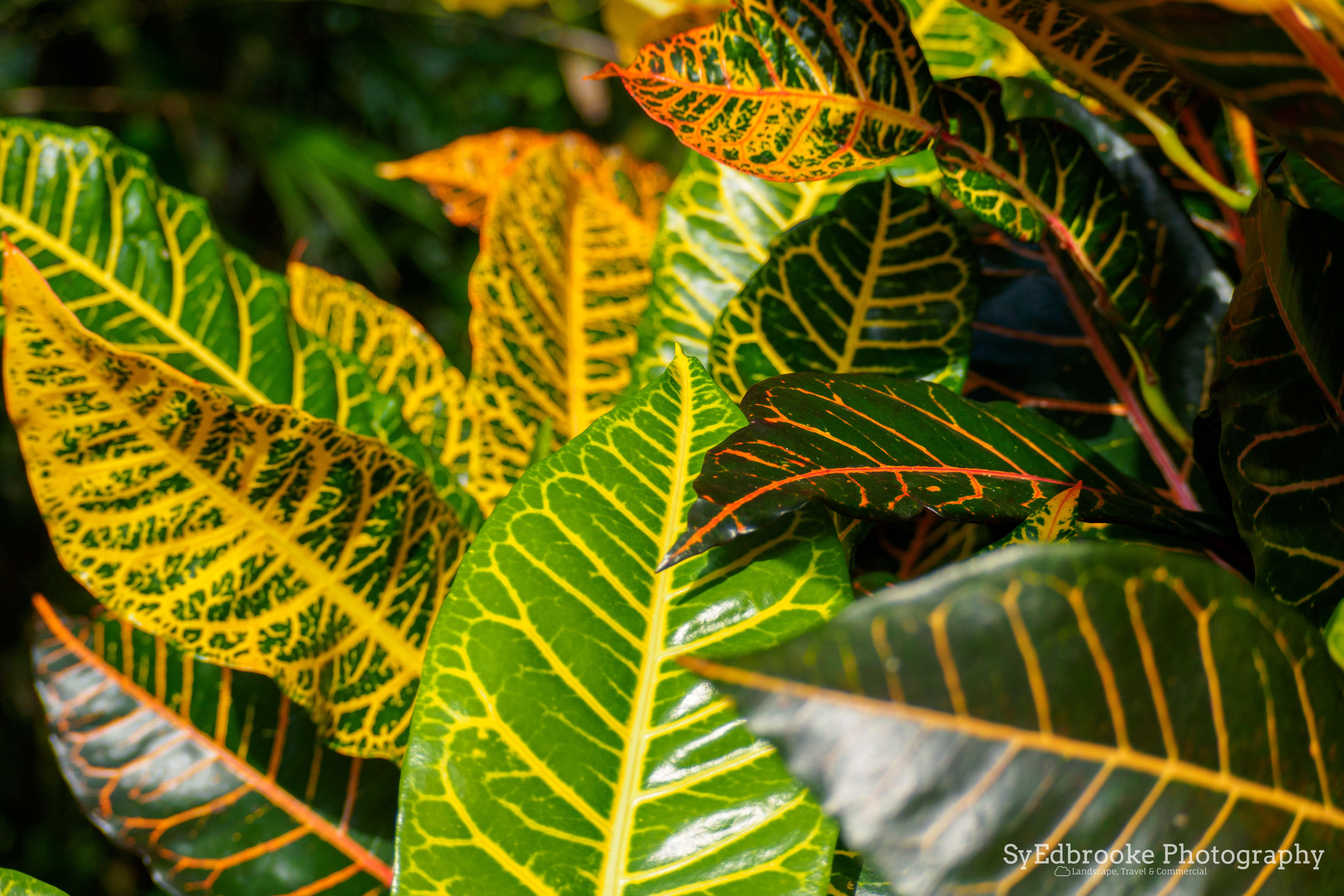 The colours in the TDH garden. f4, ISO 200, 1/400, 80mm