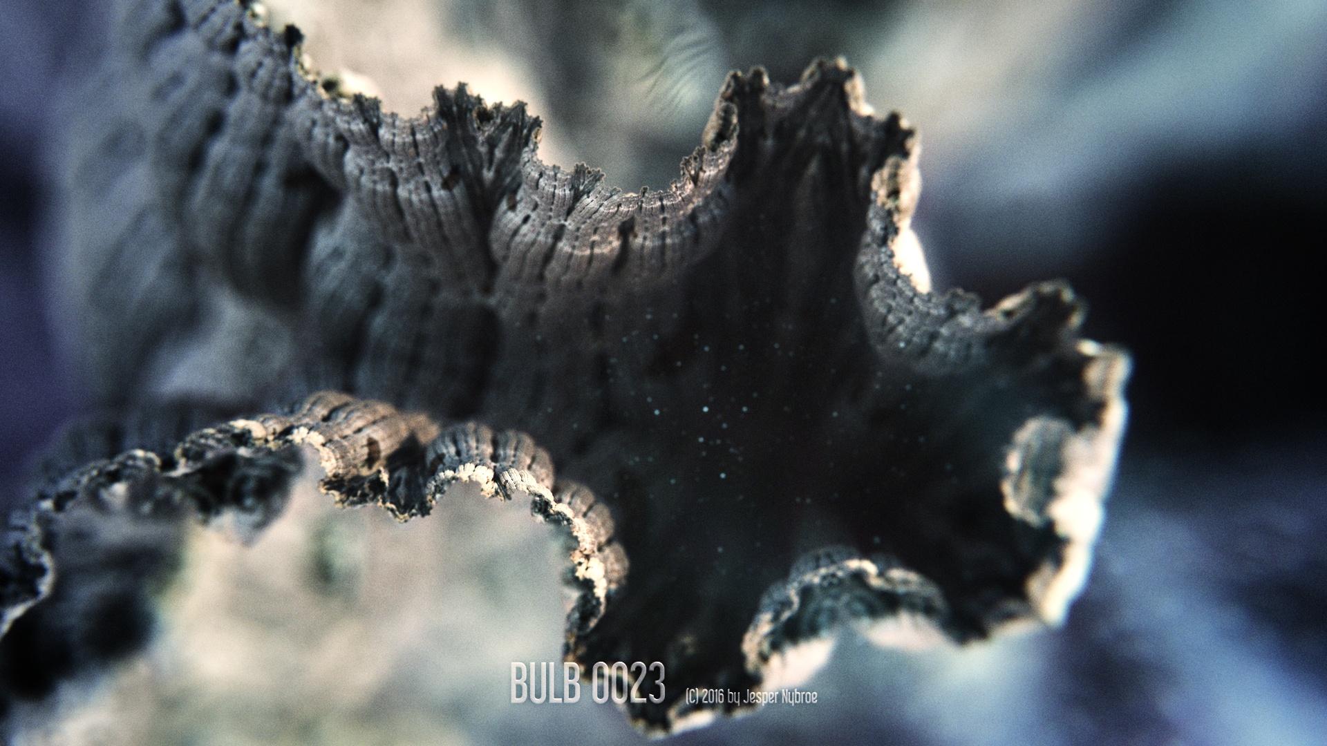 Bulb_0023.0001.jpg