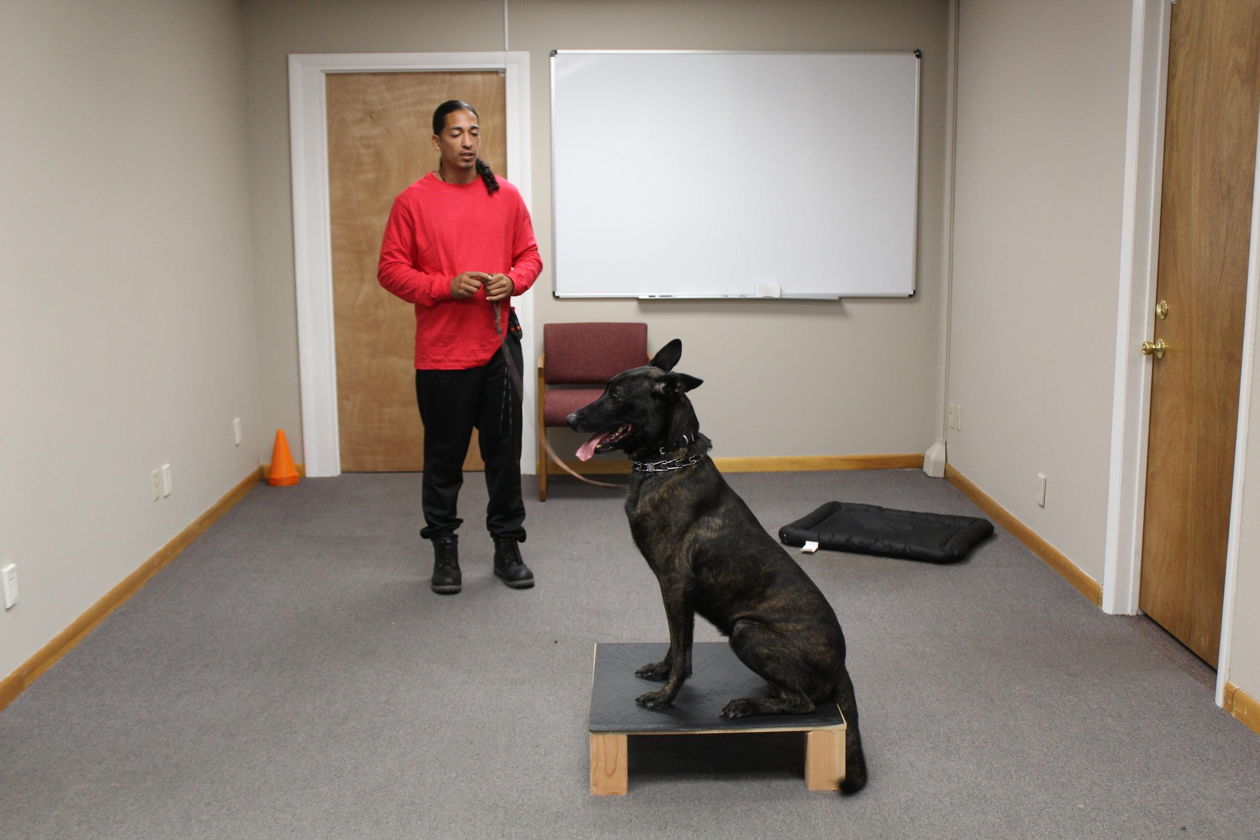 havoc nate the dog man training