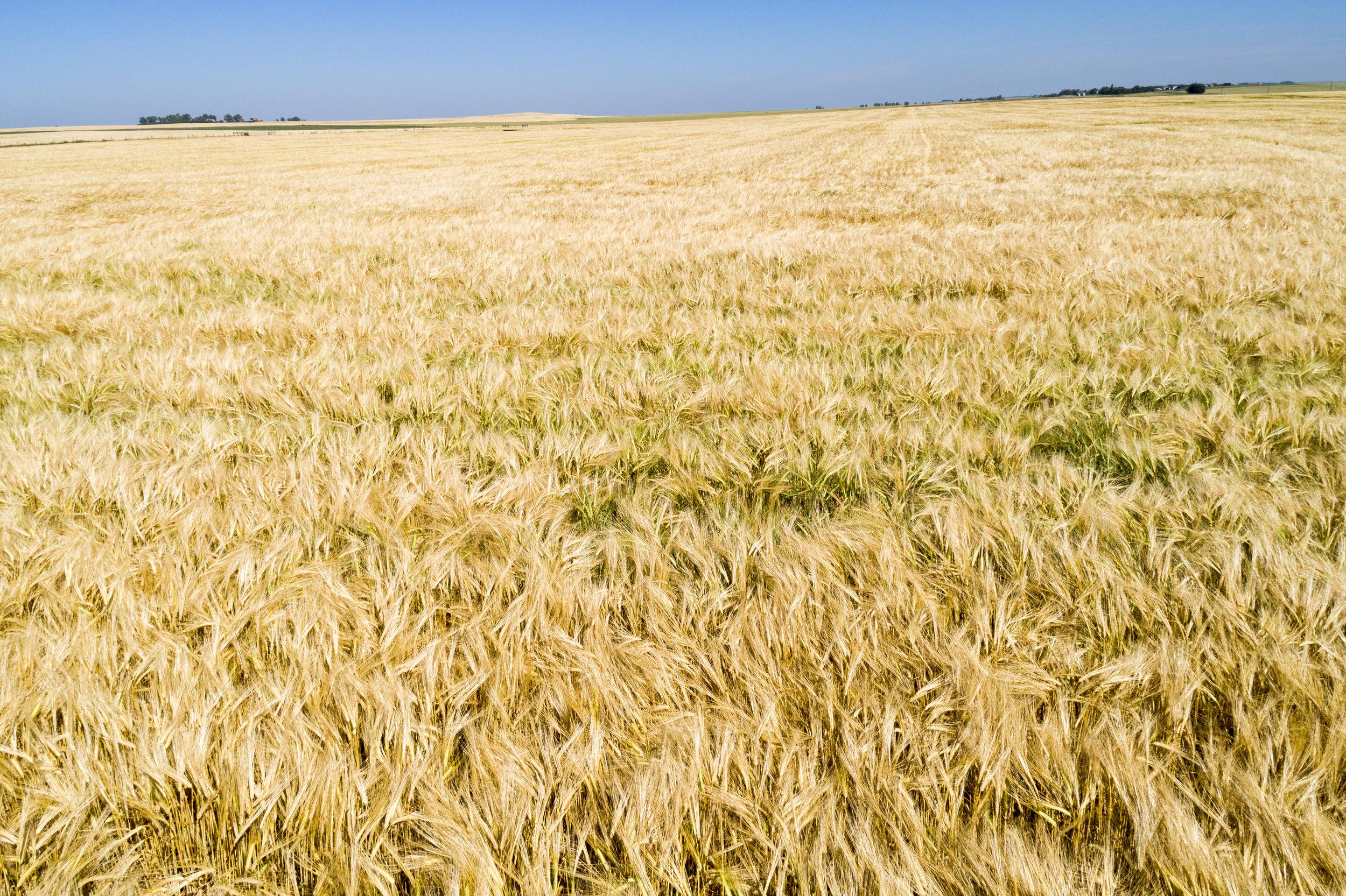 Barley - Equipment Replace.jpg