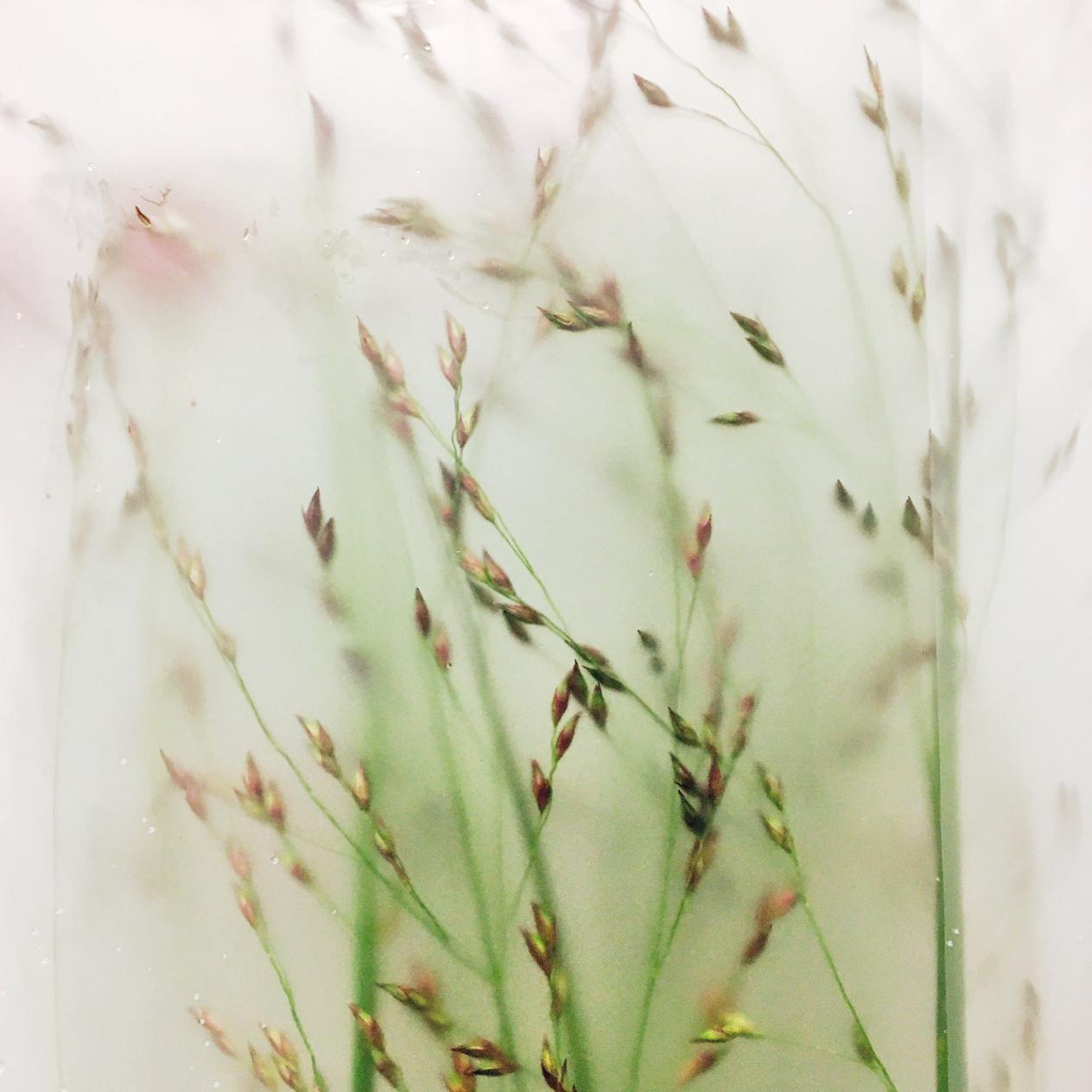 L_grass.jpg