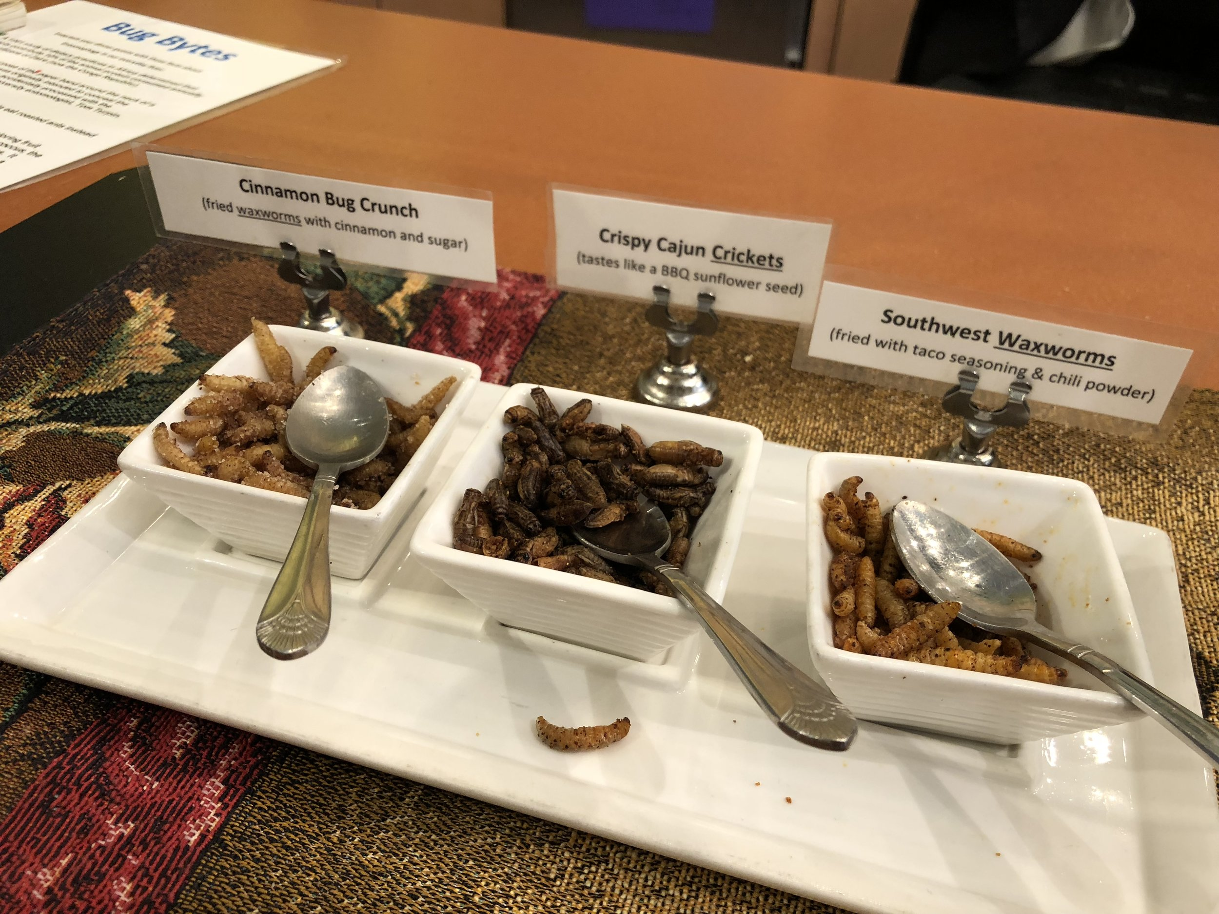 A sample of the insects you can eat while visiting the Insectarium in New Orleans