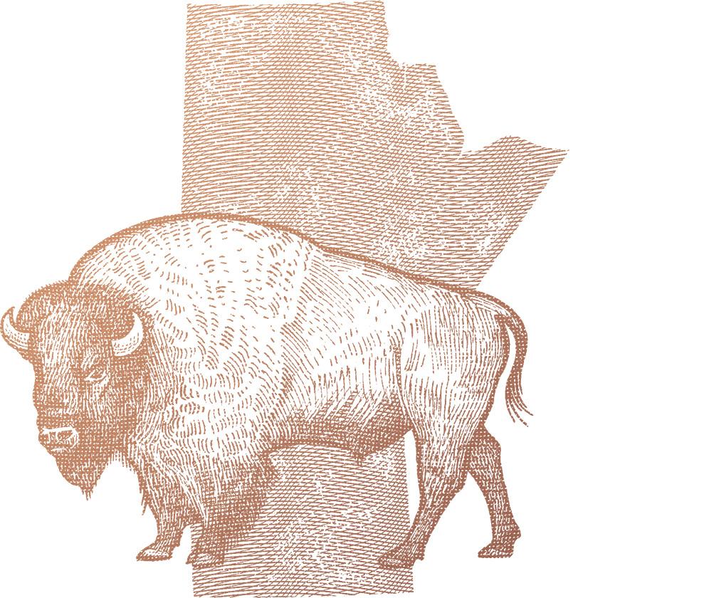 bison6.jpg