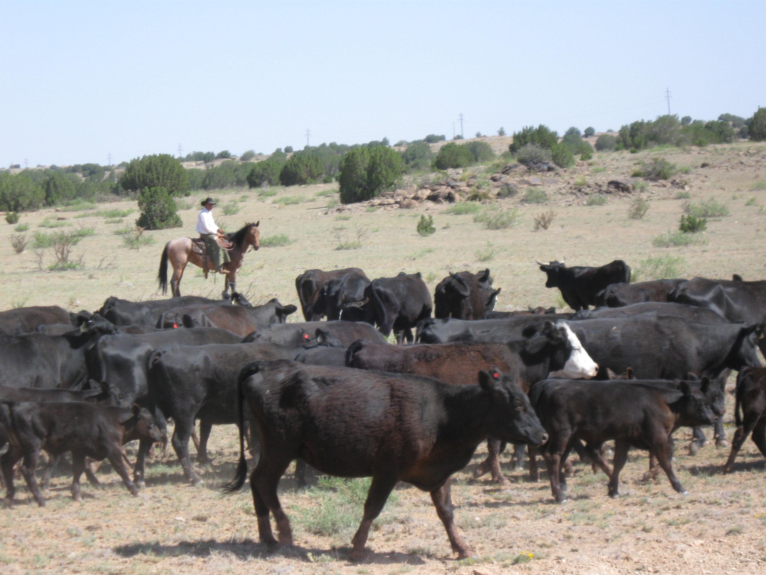 ! ranch slide 9.JPG