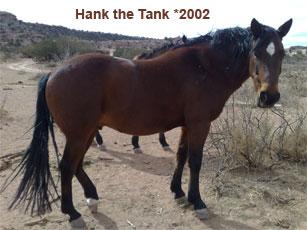 Hank_2.jpg