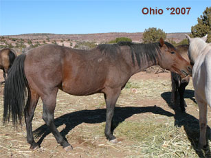 Ohio_0.jpg