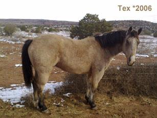 Tex_1.jpg