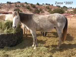 Zane_0.jpg