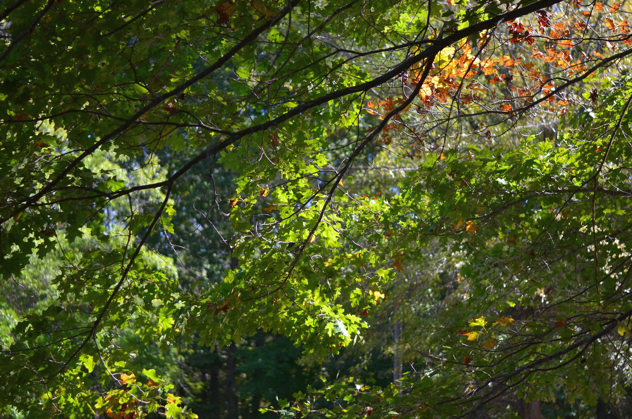 Light through the trees -- taken on our Field Trip to the Haw River State Park, 10/20/2017. One of many gorgeous views to look forward to when you join us in 2018.