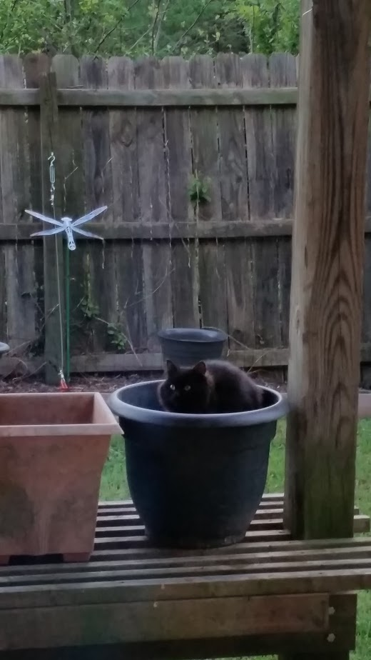 """""""Midnight"""" (also not our cat) making himself quite comfortable in a pot under the bird feeder."""
