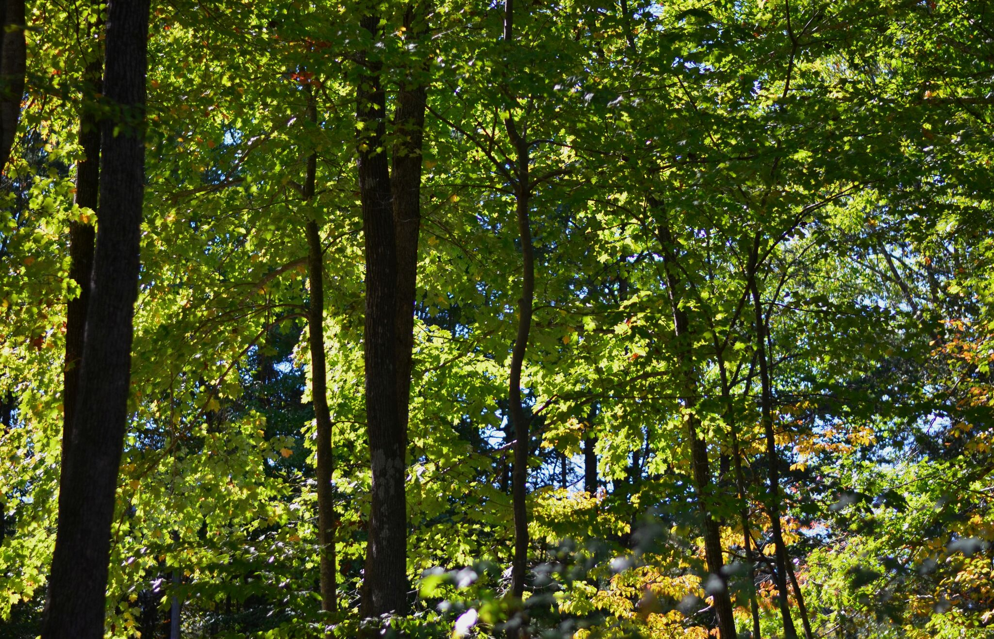 HRSP greenery.jpg
