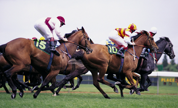 horse-race-pic.png