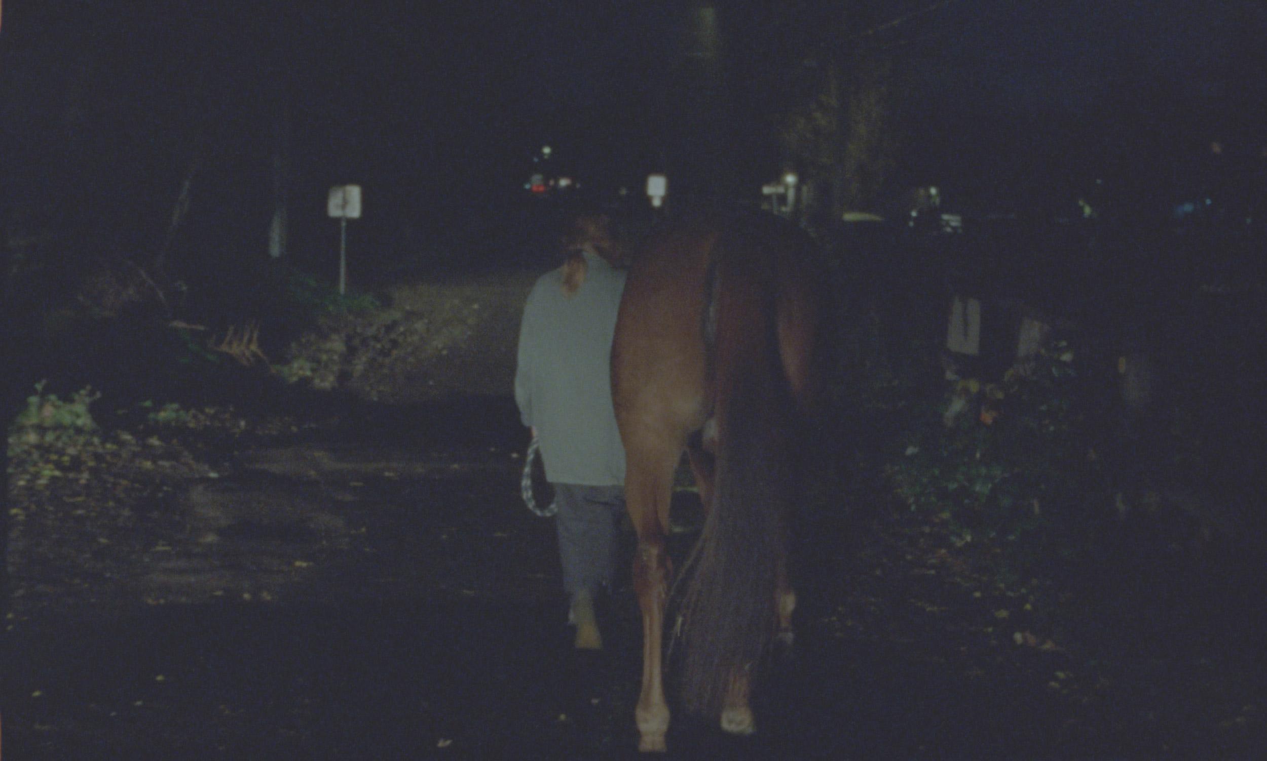 HORSES_3.jpg