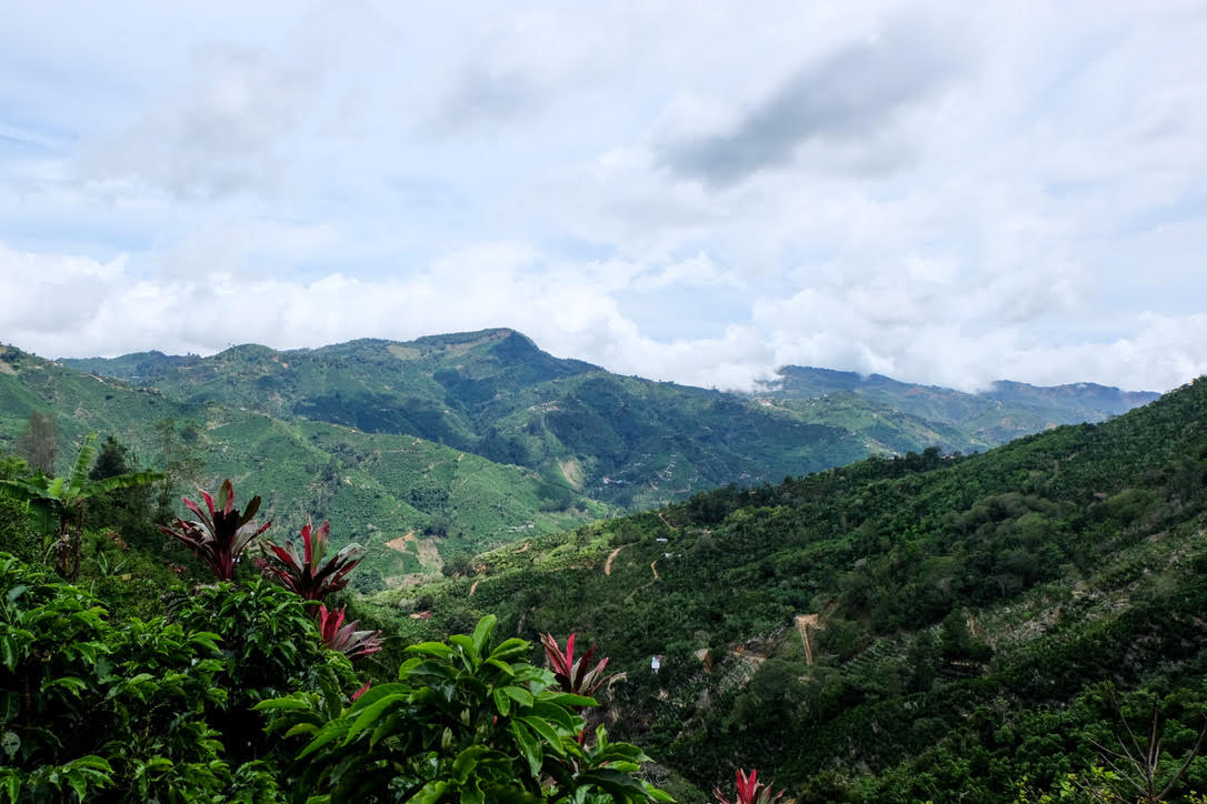 Juan Carlos Navarro's farm in Costa Rica