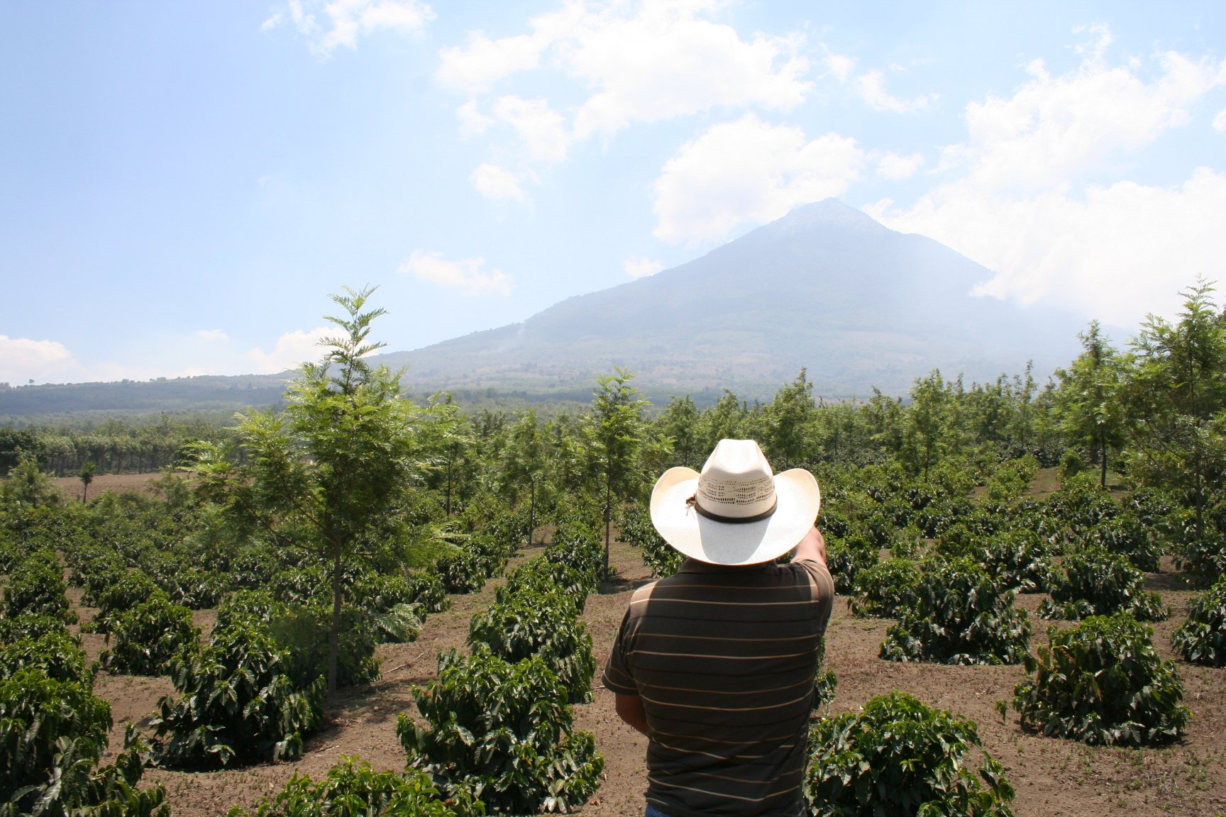 This is a coffee farm in Guatemala