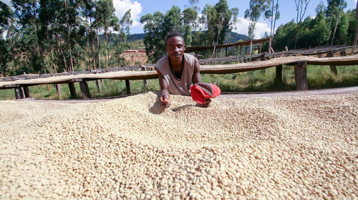 This is a coffee farmer from Burundi working at the Kiryama station