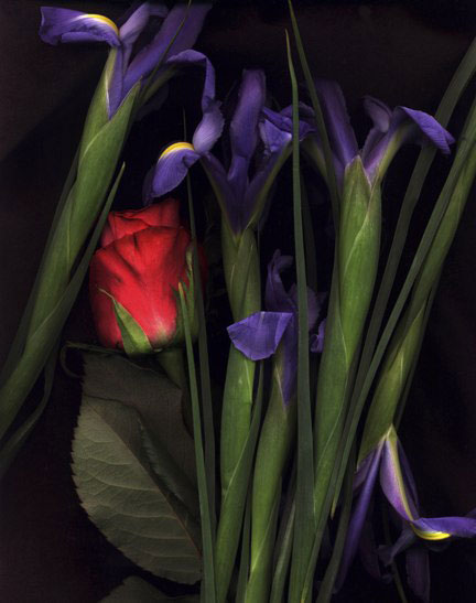Red Roses with Irises