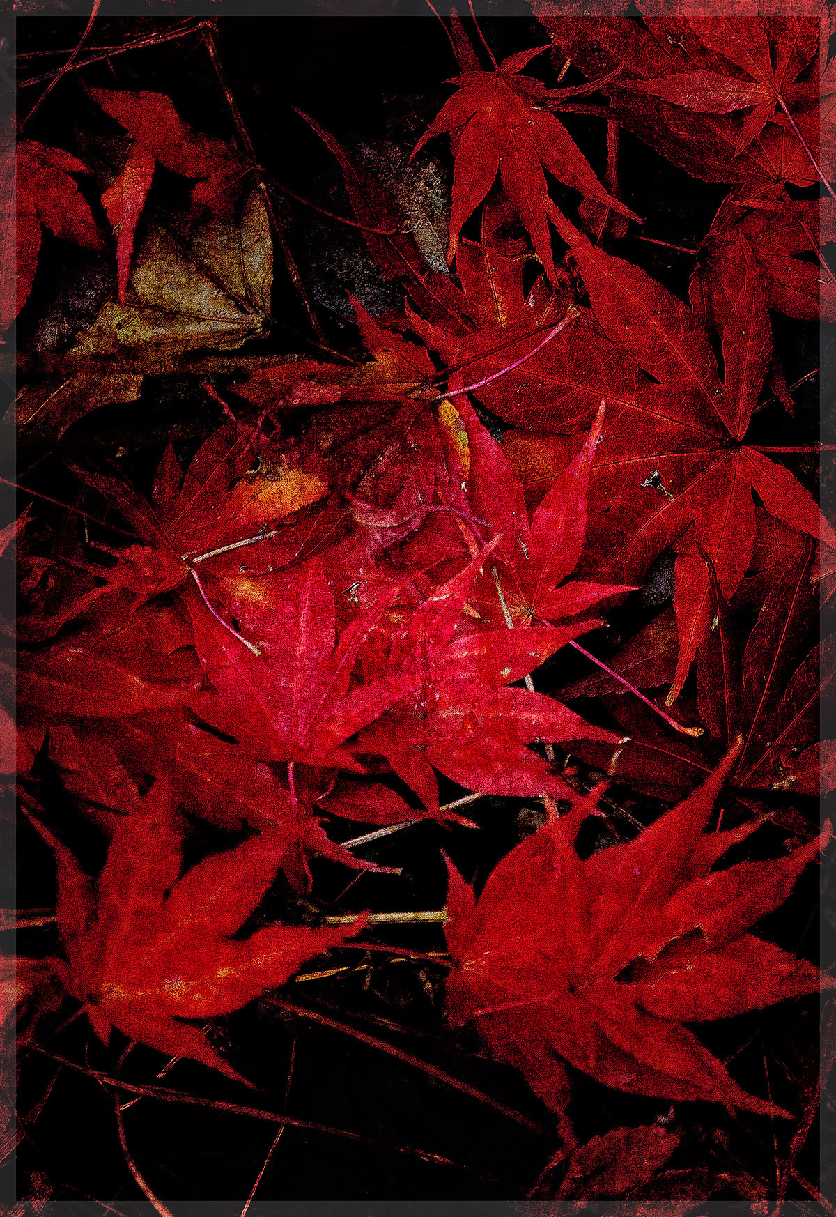 Red Maple Leaf Collage