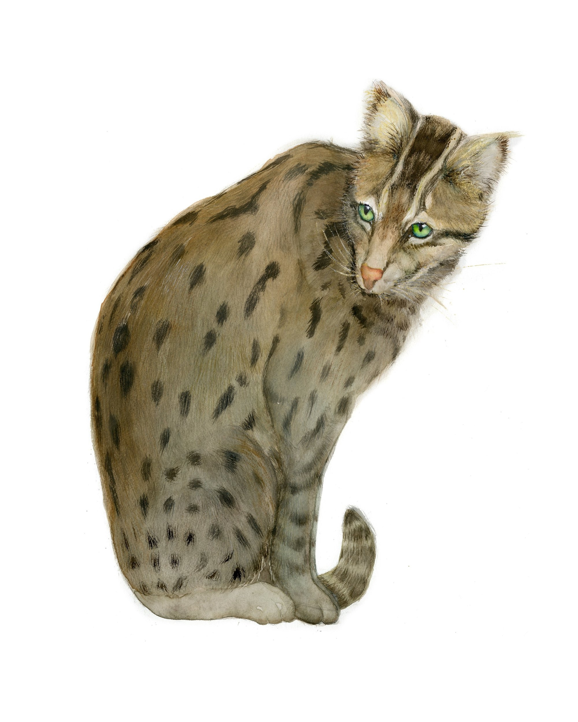 Indian Fishing Cat