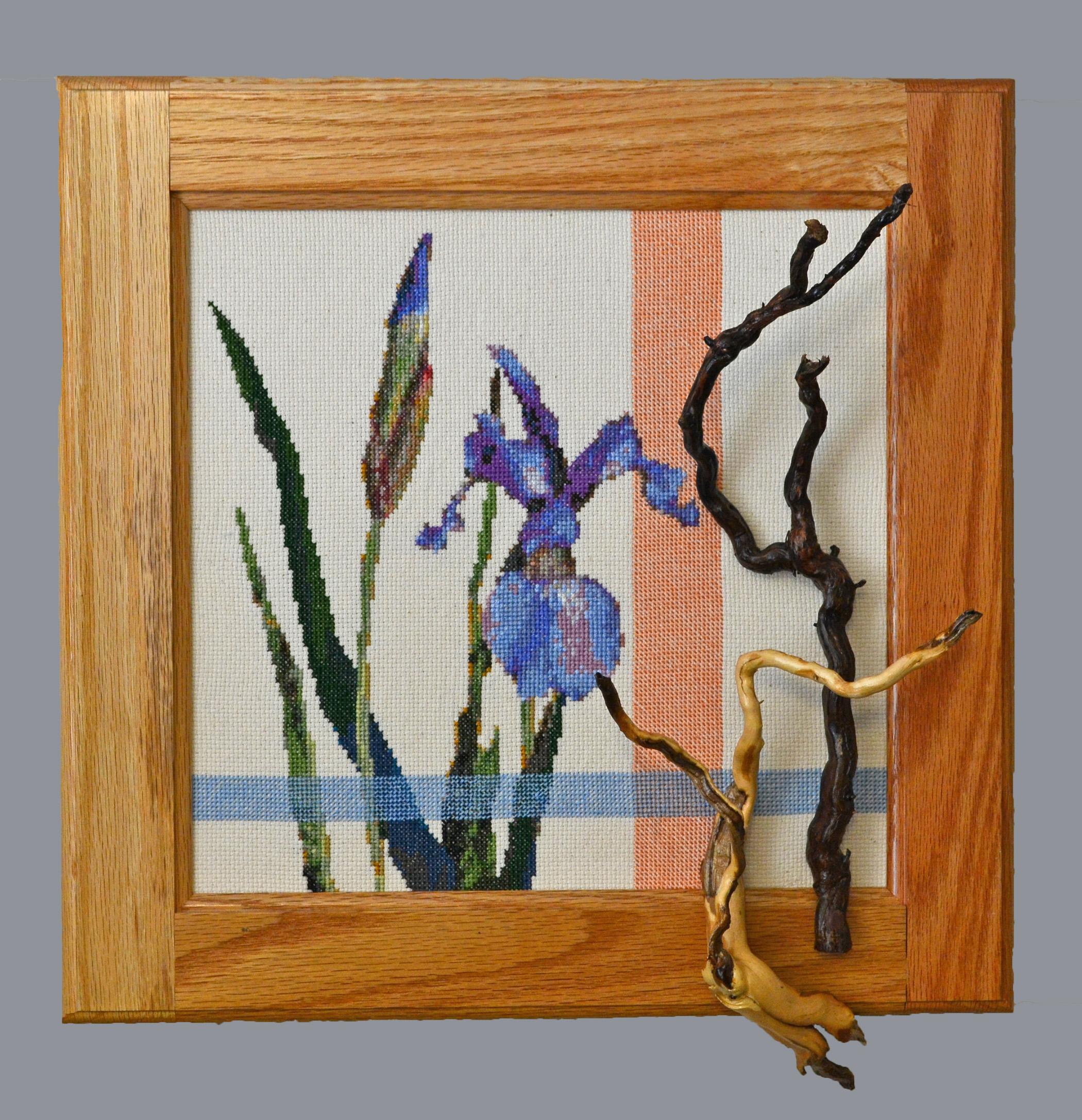 siberian iris with roots.jpg