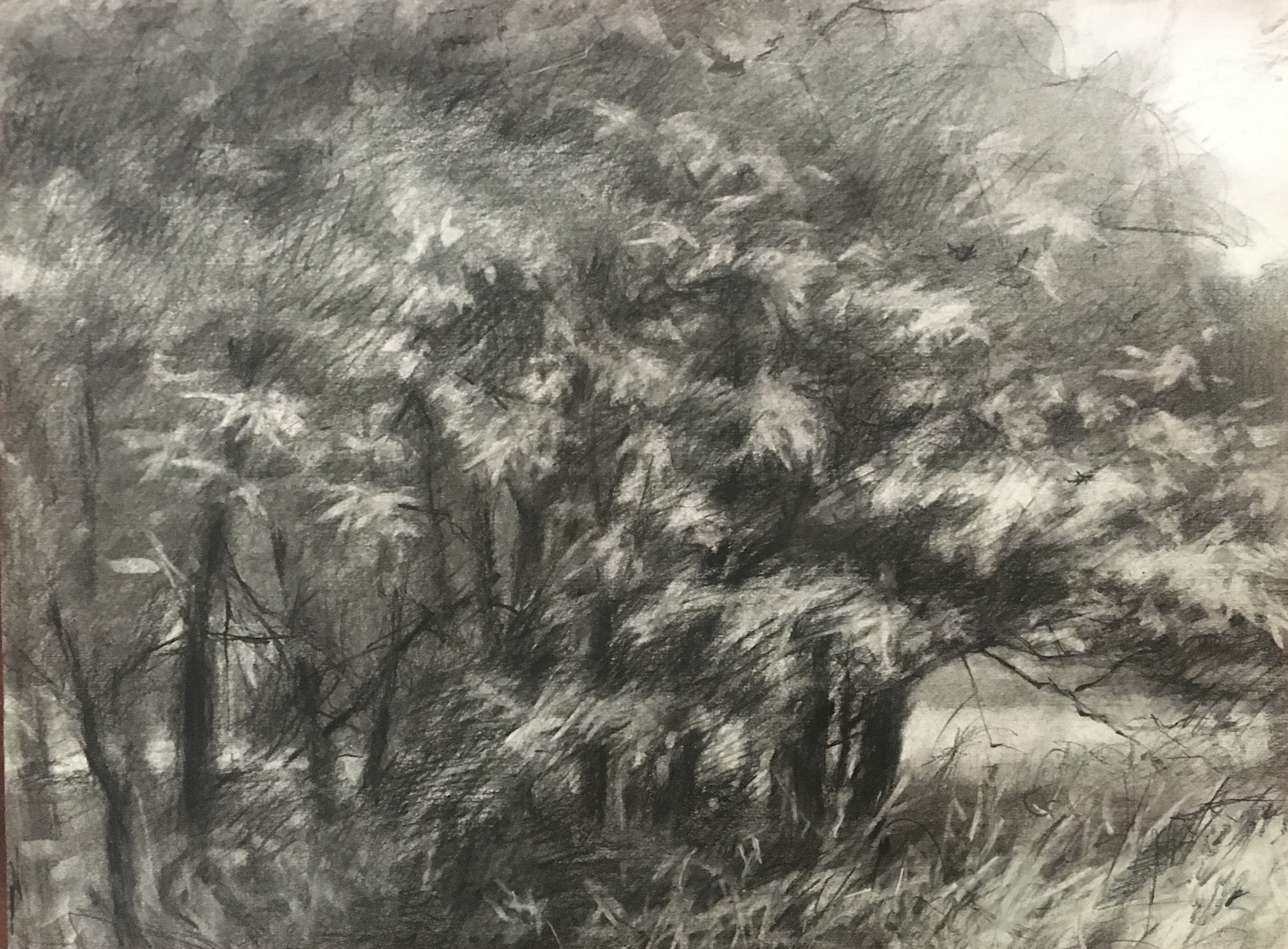 Morning View 4 • Vine charcoal & charcoal pencil on paper • 13.5 x 18""