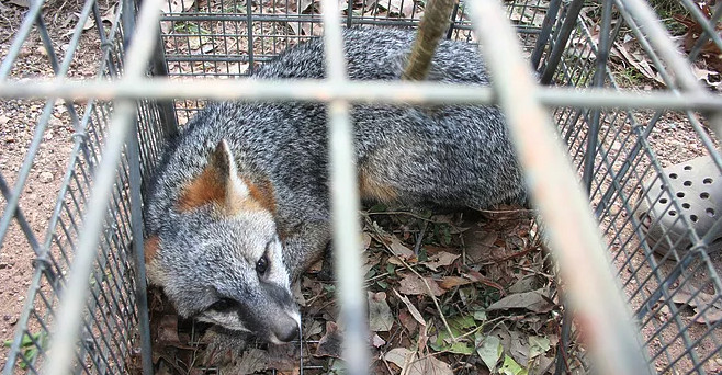AB 273 (Gonzalez-Fletcher) Wildlife Protection Act of 2019
