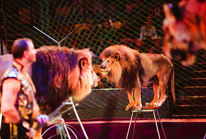 SB 313 (Hueso) - Animals: prohibition on use in circuses