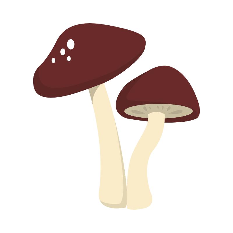 fungi:yeast.png