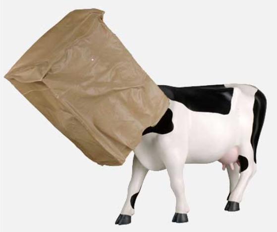 Cow Hide.   Photo credit: Cow Parade  .