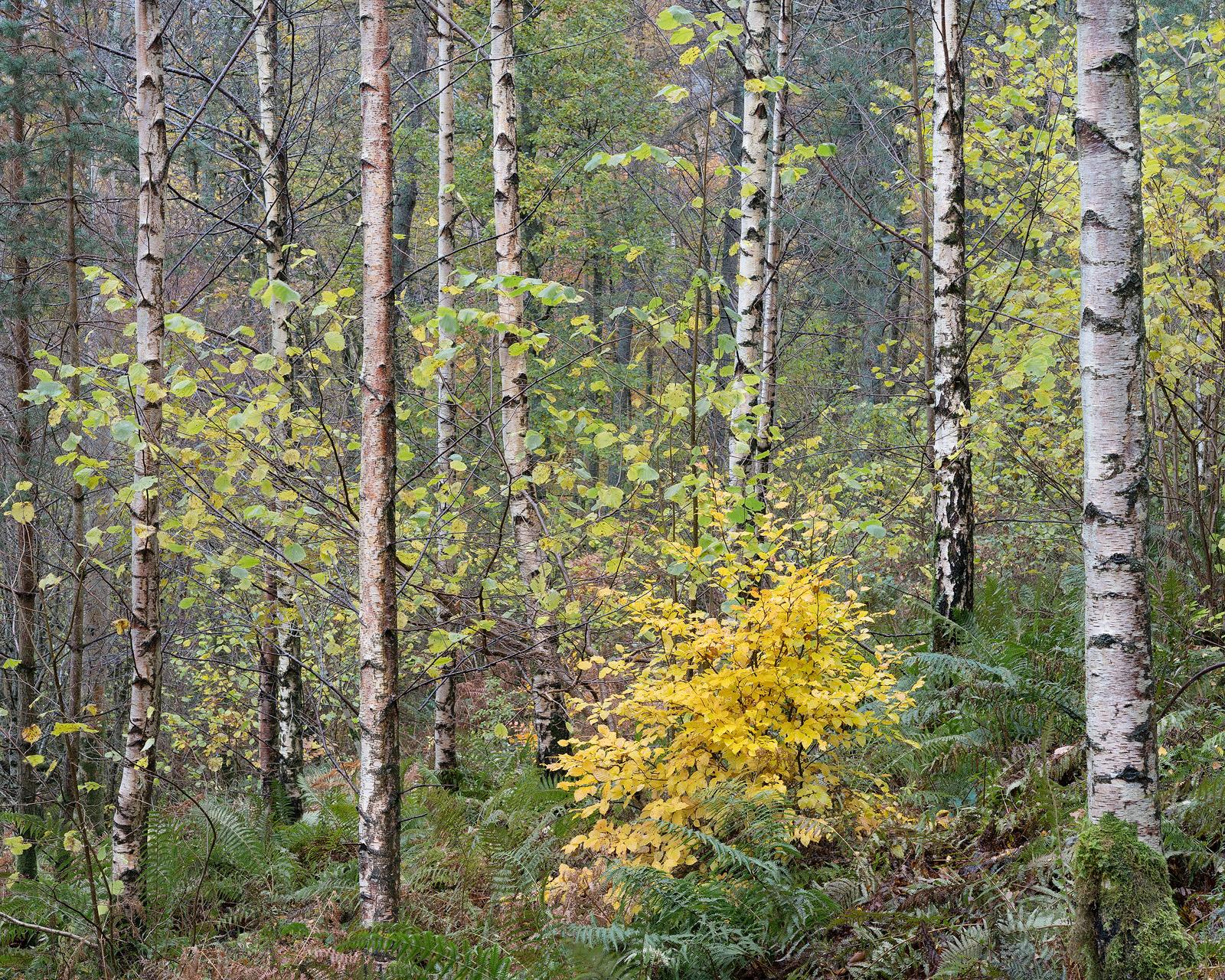 Great Woods.jpg