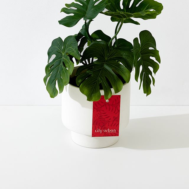@lily.urban product tags