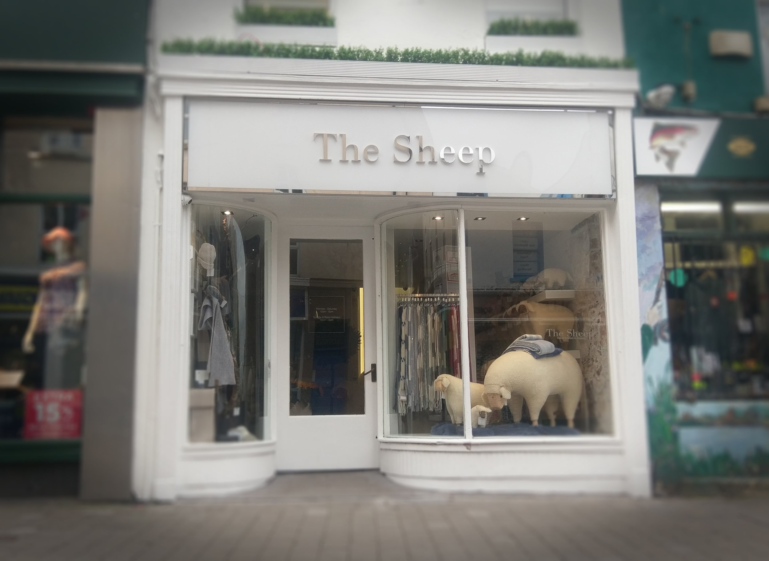 The Sheep, Mainguard St, Galway