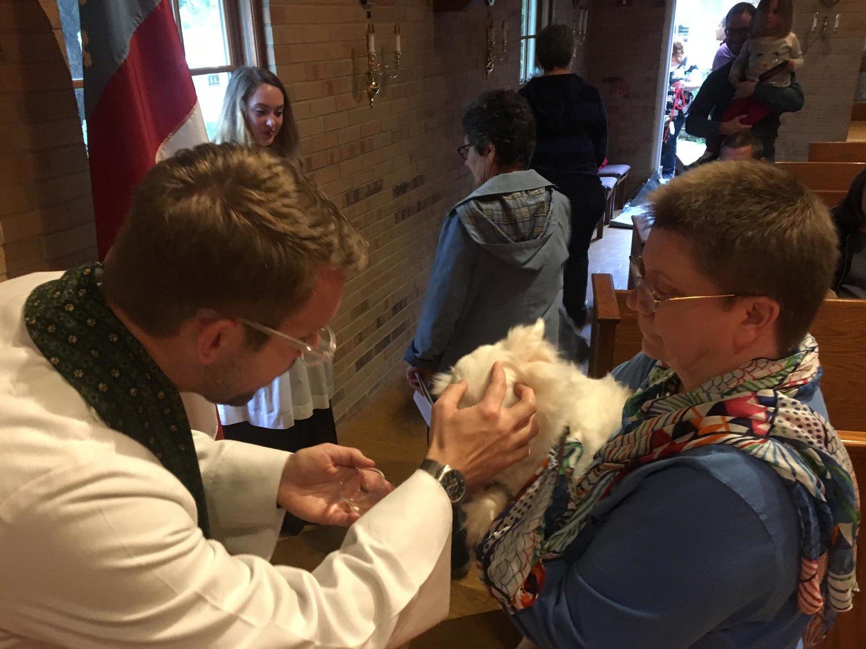 Pet Blessing — St  Ann's Episcopal Church Woodstock
