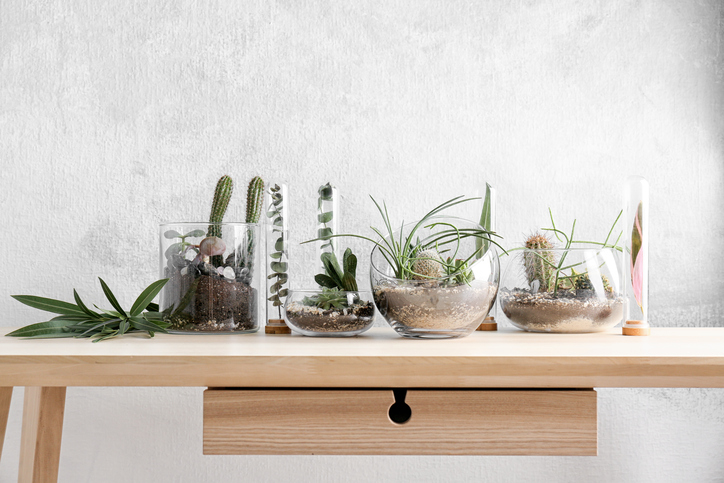 Florarium-in-glass-vases-with-succulents-on-wooden-table-869618594_727x484.jpeg