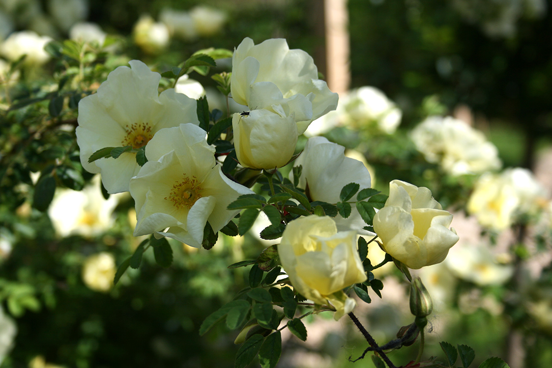 Garden29.jpg