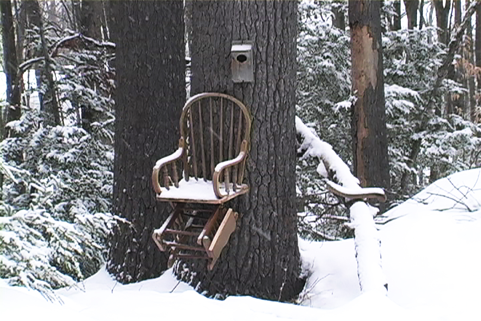 Chairs on Trees, No. 1