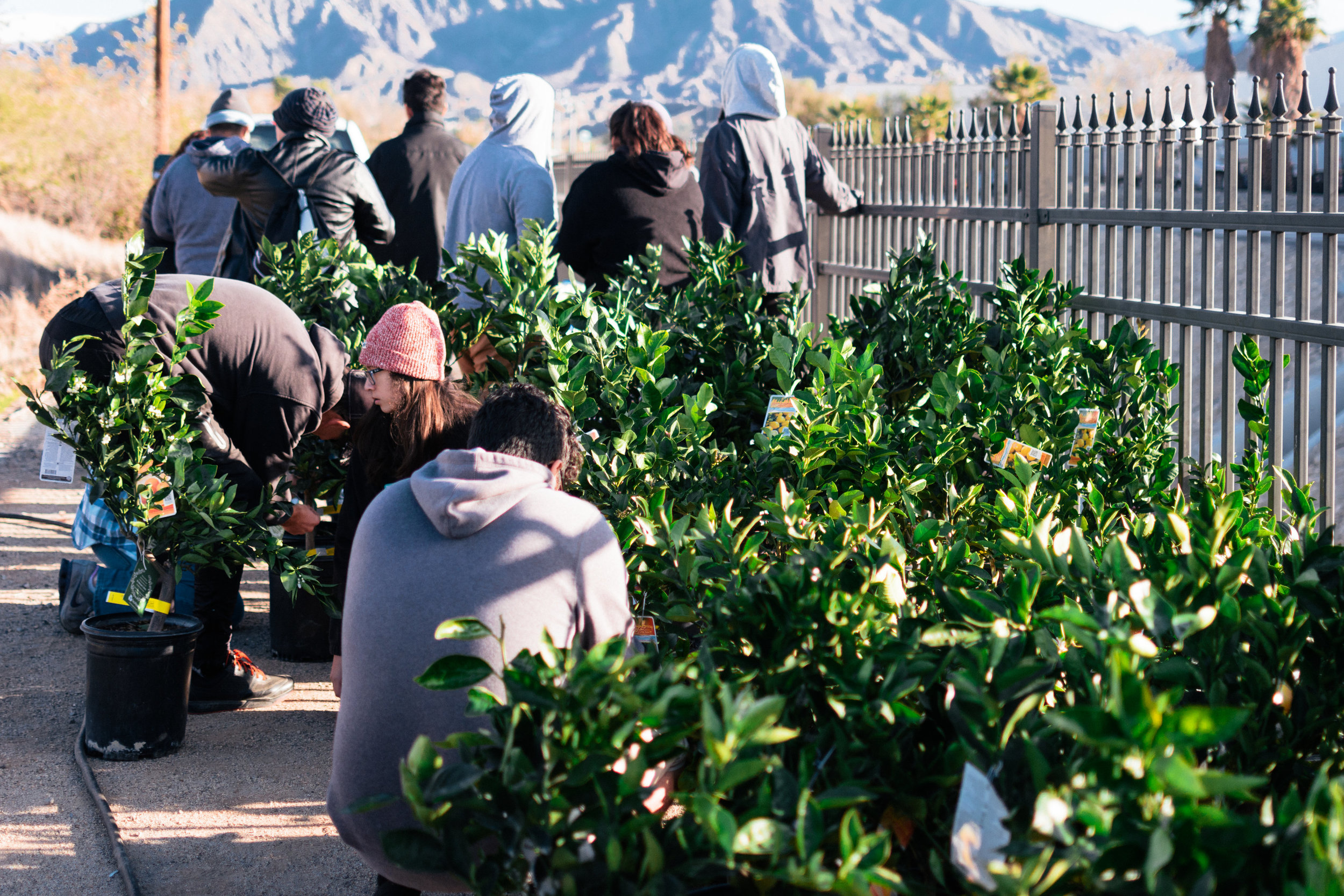 TreePeople-FruitTrees-3113.jpg