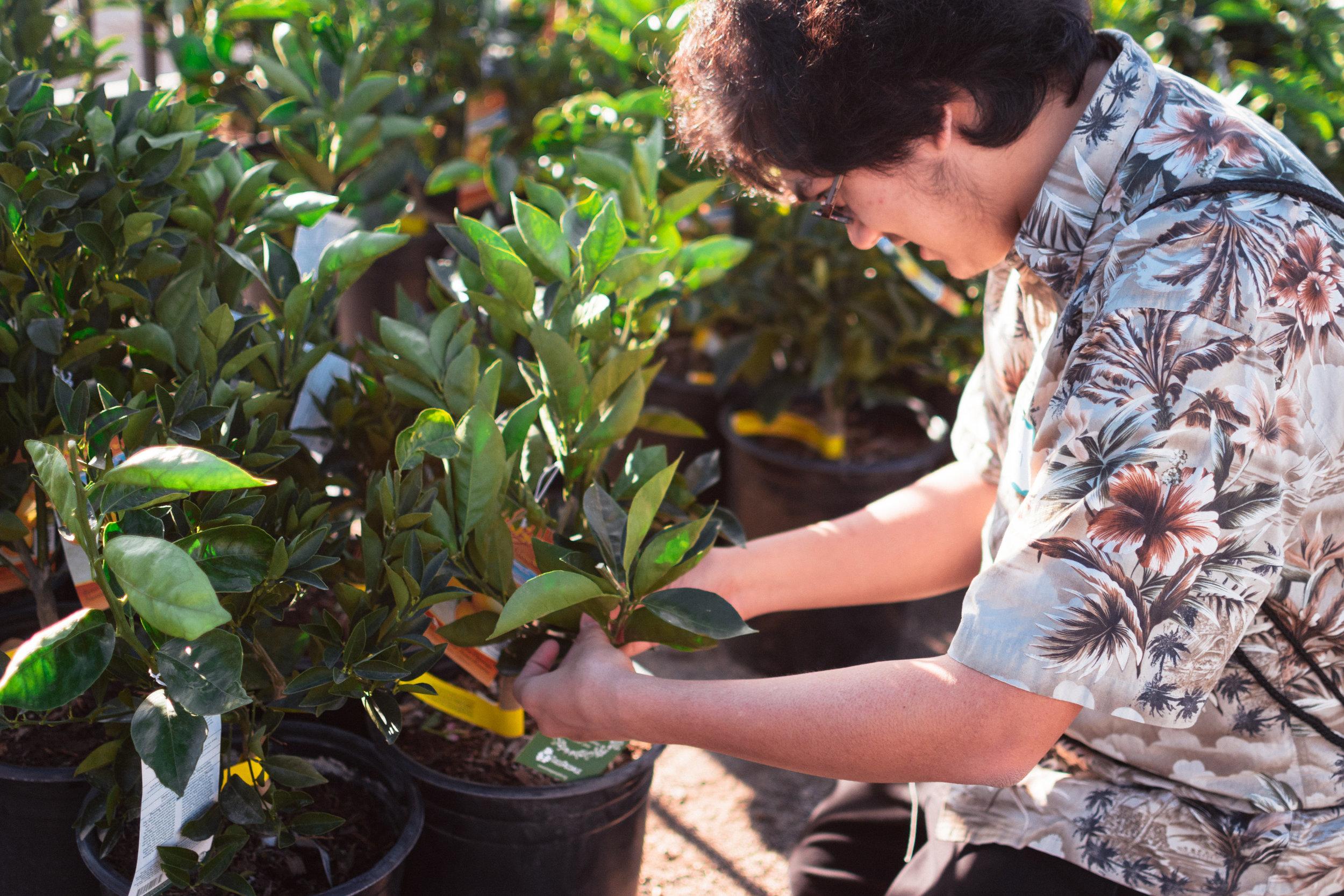 TreePeople-FruitTrees-3127.jpg