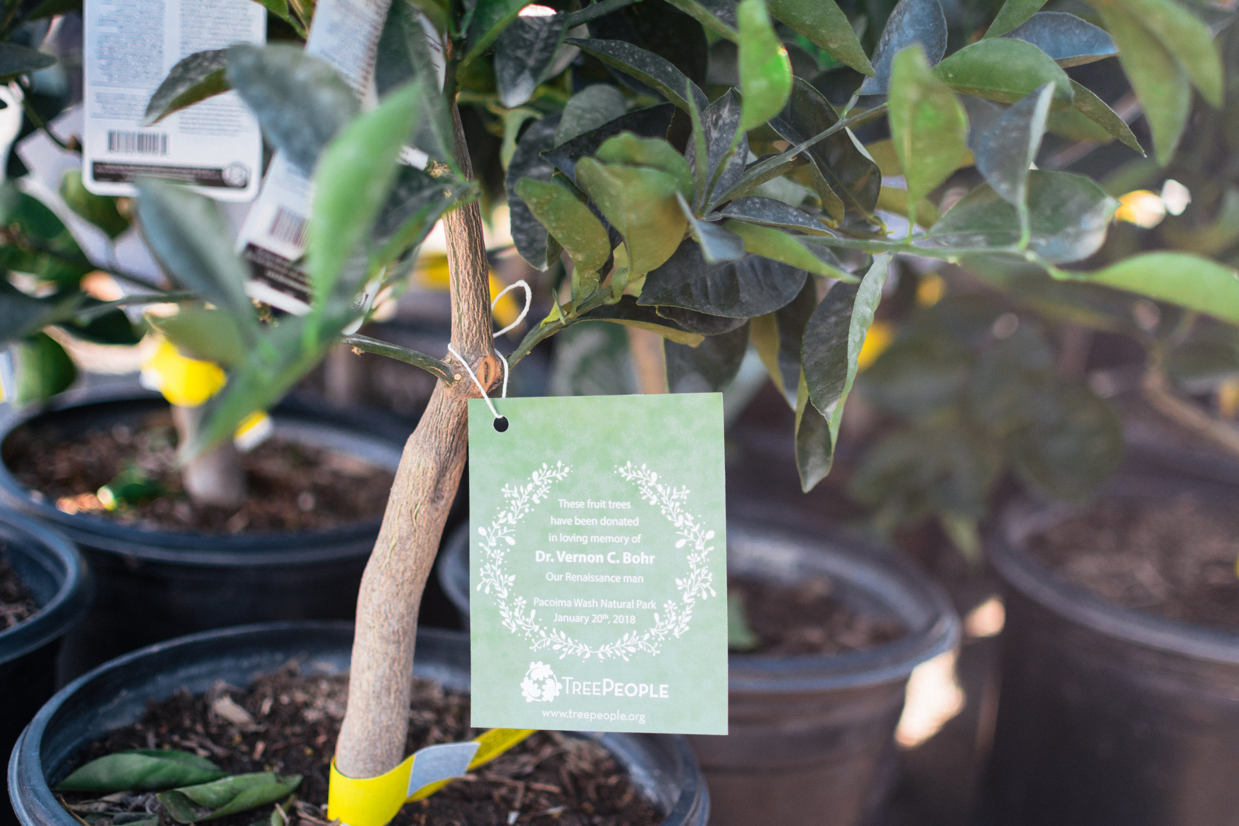TreePeople-FruitTrees-3146.jpg