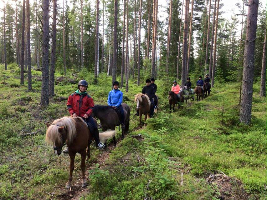 Try out icelandic horseback riding at www.ridislandshast.se (30 min from our location)