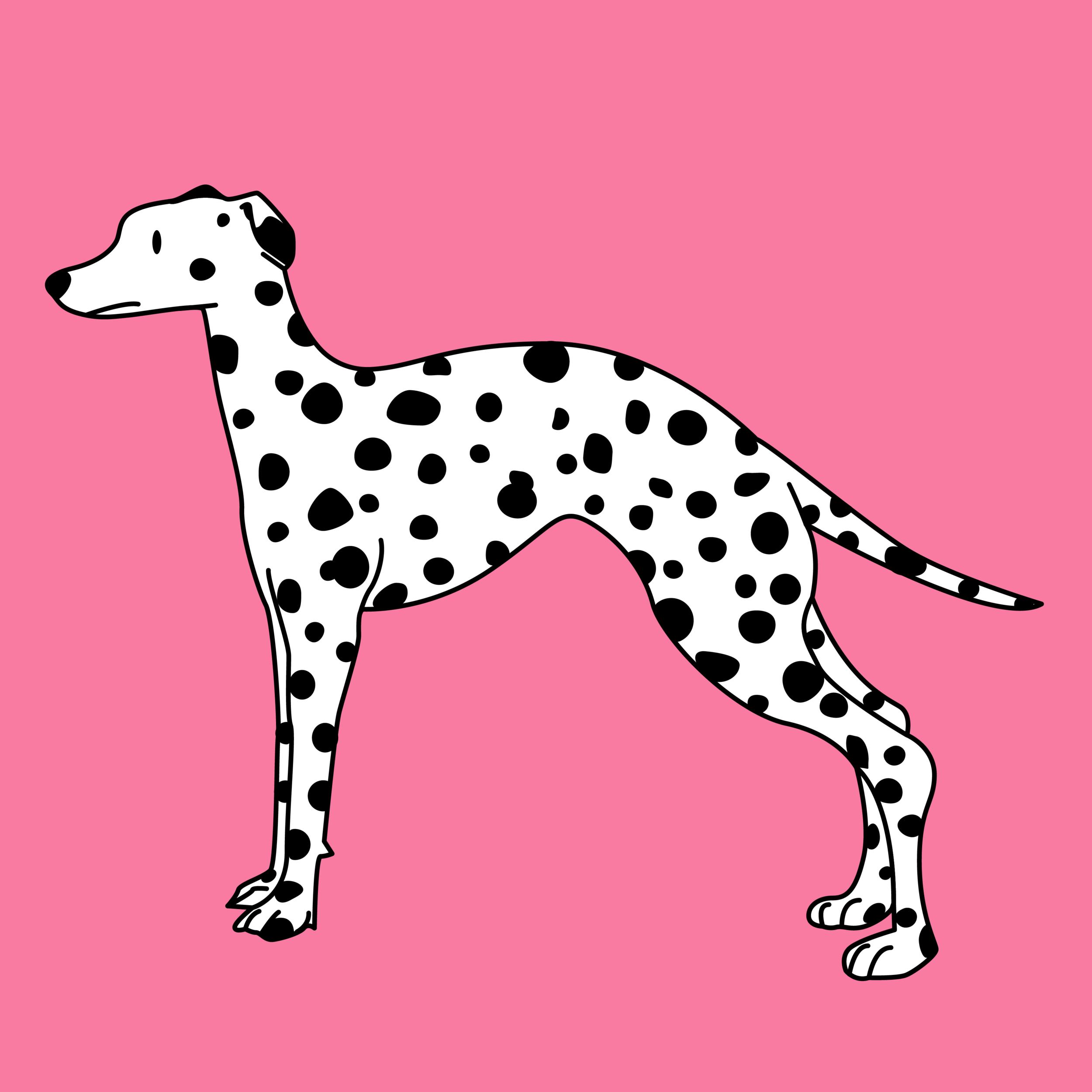 dalmatian_TrevorYardleyJones.png