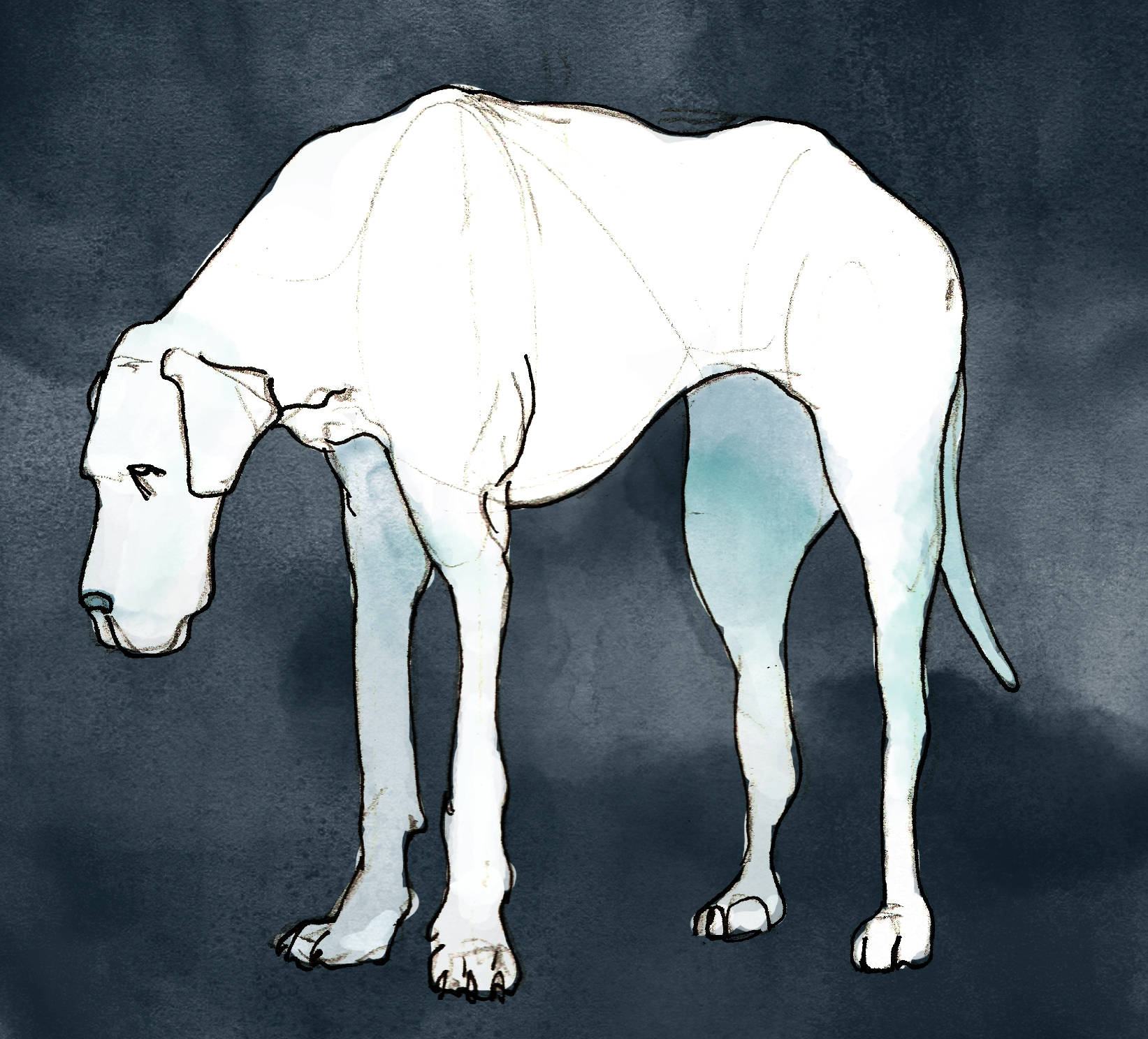 Dog 1_TrevorYardleyJones.jpg