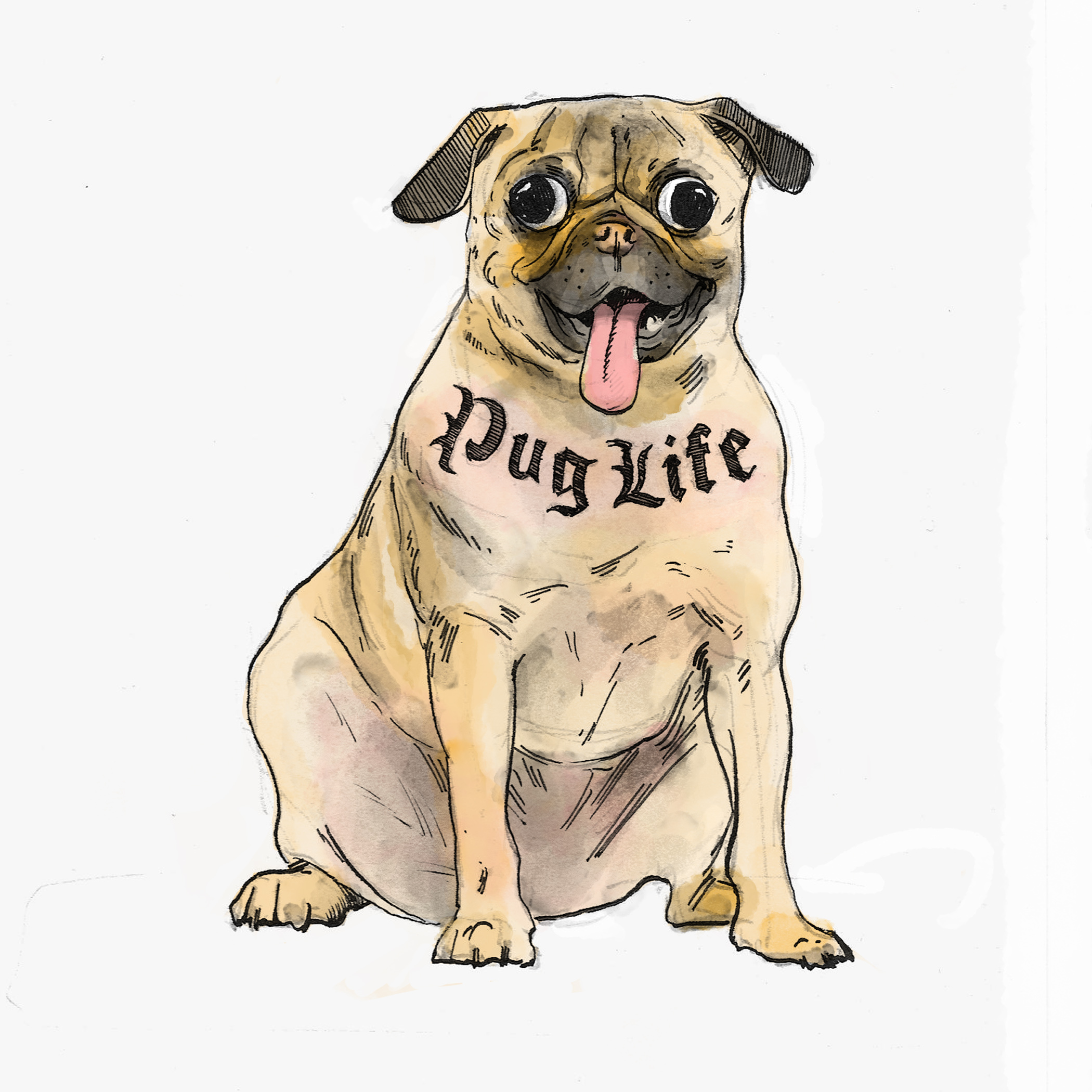 Dog 13.jpg